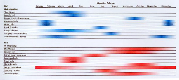 Fish Migration Calendar for the Styx River Catchment