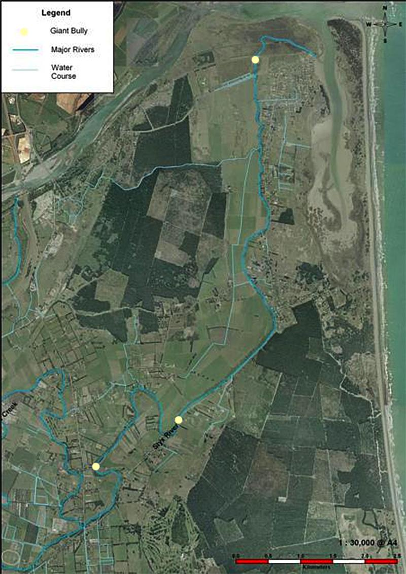 Giant Bully Distribution