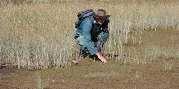 Graeme Worner surveying salt marsh plants
