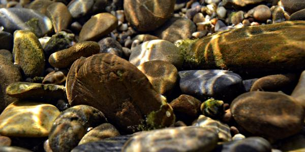 Streambed substrate, in this case rocks & pebbles